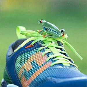 Footjoy Freestyle Frog